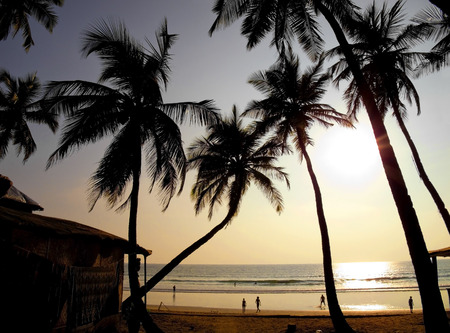 Palms silhouettes against sun  photo