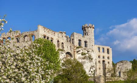 ogrodzieniec: Ruins of a castle and tree in blossom, Ogrodzieniec, Poland