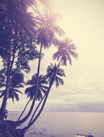 Vintage stylized tropical beach with palm tree at sunset  photo