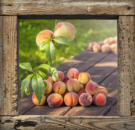 wooden frame: Fresh peaches on garden table in wooden frame background.