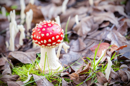 Autumnal small toadstool in natural environment. photo
