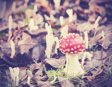 filtered: Vintage imagen filtrada de seta en el bosque.