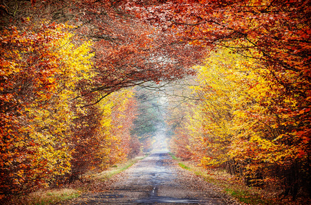 road autumnal: Picture of road in a misty autumnal forest.
