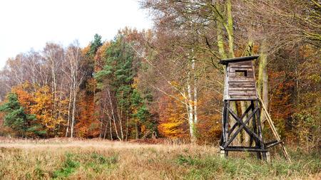 animales del bosque: Vista panor�mica de un p�lpito de caza en oto�o. Foto de archivo