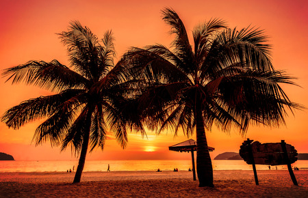 palm tree sunset: Vintage toned picture of palms silhouettes against sunset.