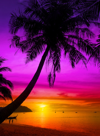 Palm tree silhouette on tropical beach at sunset. Stock Photo - 35953431