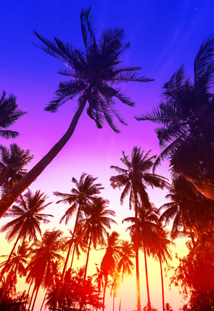 Palm trees silhouettes on tropical beach at sunset.