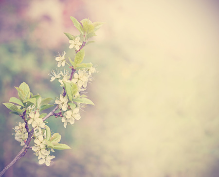 Retro filtered natural background made of blooming tree in spring time, space for text. photo