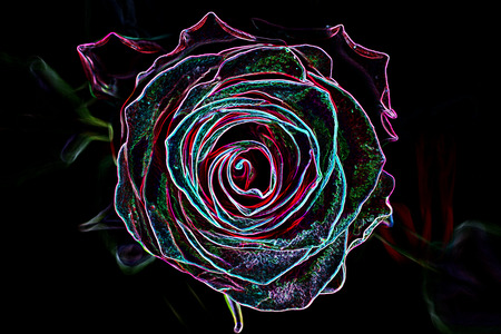 neon plant: Abstract background made of rose flower, glowing neon style. Stock Photo