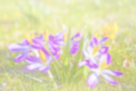 colores pastel: Naturaleza resumen de antecedentes de flores borrosas.