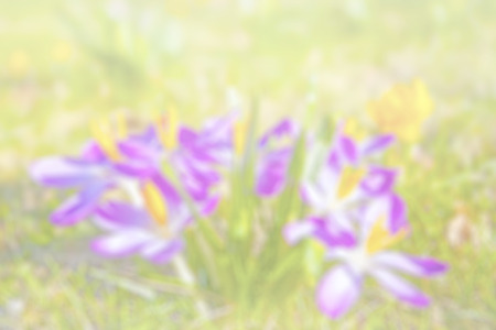 pastel colour: Nature abstract background made of blurred flowers.
