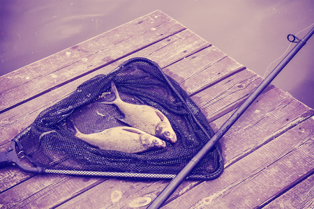 abramis: Vintage toned common breams (Abramis brama) on a fishing net, fishing background.