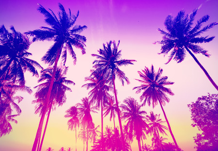 Vintage toned palm trees silhouettes at sunset.