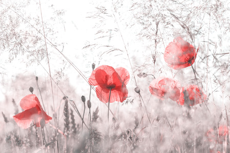 Retro style desaturated photo of summer meadow, nature background, shallow depth of field. Stock Photo