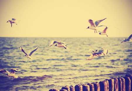 animal photo: Vintage retro filtered birds on the sea, nature background, old film effect. Stock Photo