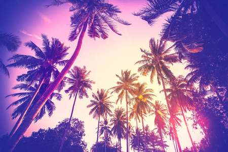 Vintage toned holiday background made of palm tree silhouettes at sunset. Standard-Bild