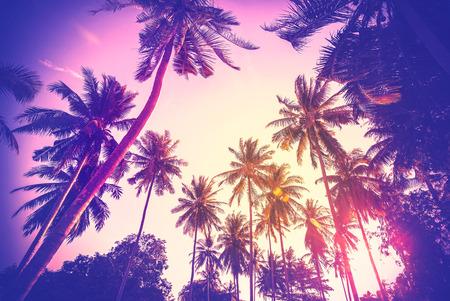 Vintage afgezwakt vakantie achtergrond gemaakt van palmboom silhouetten bij zonsondergang. Stockfoto - 43090486