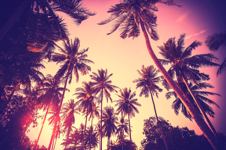 Vintage toned holiday background made of palm tree silhouettes at sunset. Stock Photo