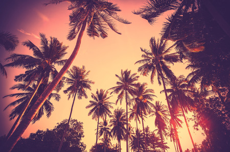 Vintage toned holiday background made of palm tree silhouettes at sunset. Stockfoto