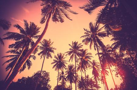�sunset: Vintage fondo de vacaciones tonificado hecho de siluetas de palmeras al atardecer.