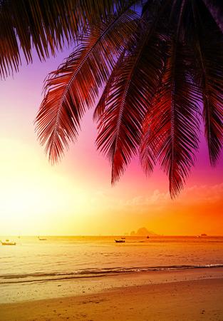 frutas tropicales: Hermosa puesta de sol sobre la playa, vacaciones de verano de fondo.
