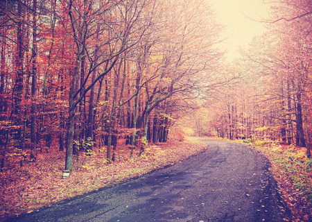 road autumnal: Vintage toned picture of a road in autumnal forest.