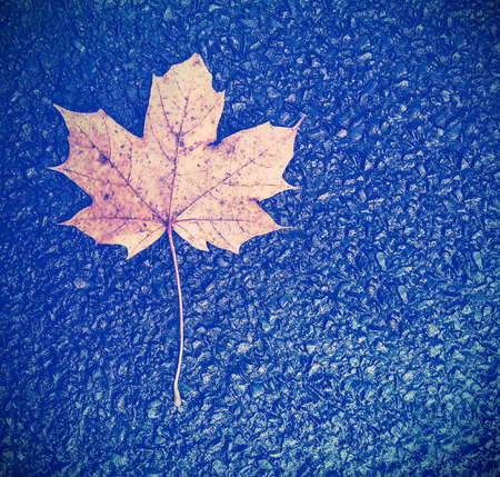the passing of time: Vintage instagram style autumn leaf on black asphalt background, passing time concept.