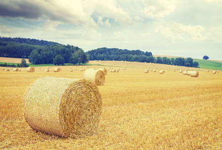 Retro toned harvested field with hay bales.