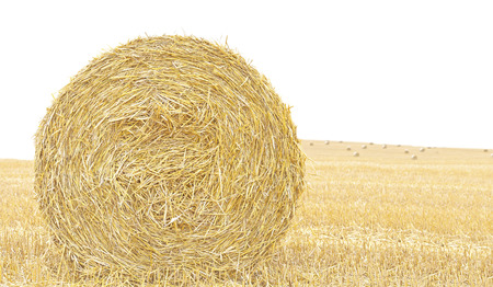 Hay bale isolated close up background with space for text. Stock Photo