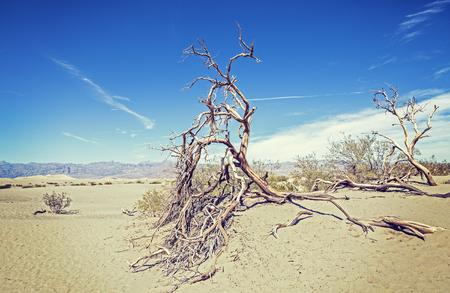 muerte: �rboles secos en las dunas de arena, fondo de la naturaleza, el desierto de Death Valley, EE.UU.. Foto de archivo