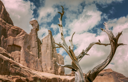 albero secco: Retro toned nature background with dry tree and red rocks, Arches NP, USA.