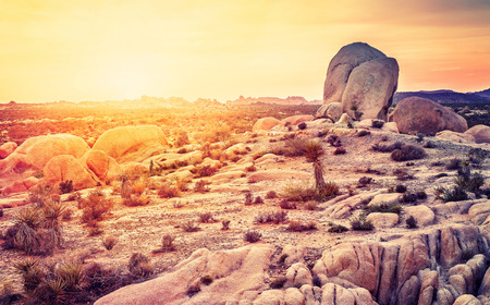 mojave desert: Sunset over desert in Joshua Tree National Park, California, USA.