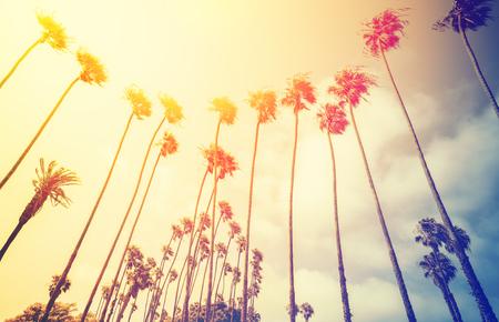 santa monica: Retro stylized palms silhouettes at sunset, Santa Monica, USA. Stock Photo