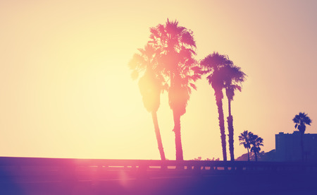 Vintage stylized picture of palms silhouettes at sunset, space for text, Santa Monica, USA. Reklamní fotografie