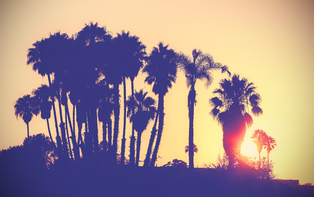 Vintage stylized picture of palms silhouettes at sunset, California, USA.