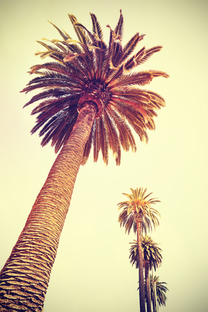 Vintage toned palm trees at sunset, holiday background, Santa Monica, USA.