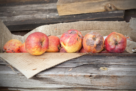 rancid: Rotten apples in carton on wooden boards. Stock Photo