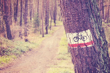 bike trail: Vintage toned bike trail sign painted on a tree in forest.