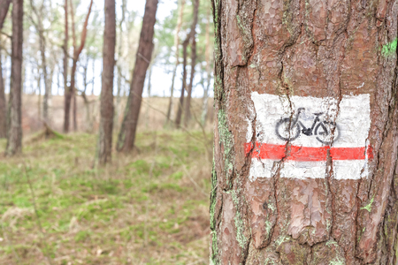 trail sign: Bike trail sign painted on a tree in forest. Stock Photo