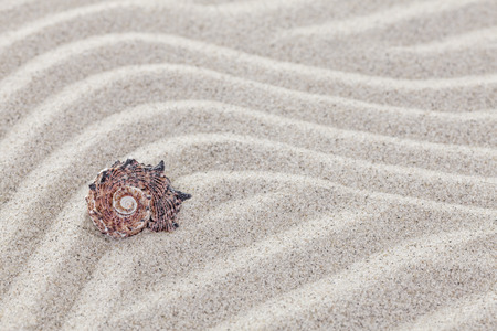 Conch shell on sandy waves, nature background. Stock Photo