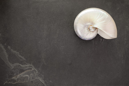 nautilus pompilius: Pearl shell of a  chambered nautilus (Nautilus pompilius) on black slate background with copy space. Stock Photo
