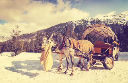 morskie: Vintage toned horses eating oats from jute bag after carriage ride by the Lake Morskie Oko in Tatra Mountains, Poland. Stock Photo