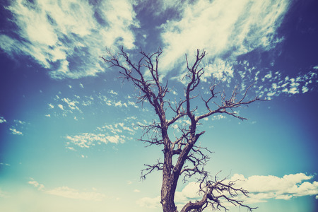 heavy effect: Vintage old film style withered tree with heavy vignette effect.
