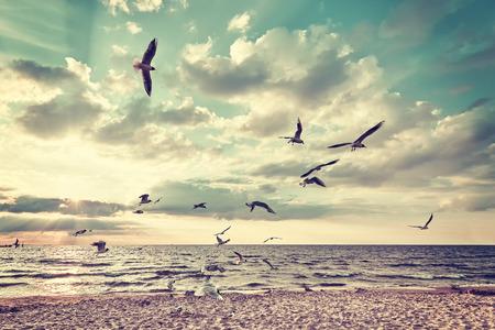 Retro gestileerd strand met vliegende vogels bij zonsondergang.