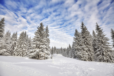 Winter landscape with snow covered trees. Stock Photo