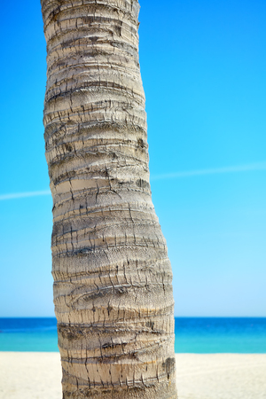 Close up picture of a coconut palm tree trunk with blurred beach in distance. Banco de Imagens