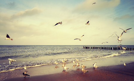 Vintage stylized picture of birds at a beach.