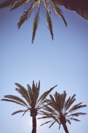 Looking up at palm trees at sunset, color toned summer vacation concept picture. Banque d'images
