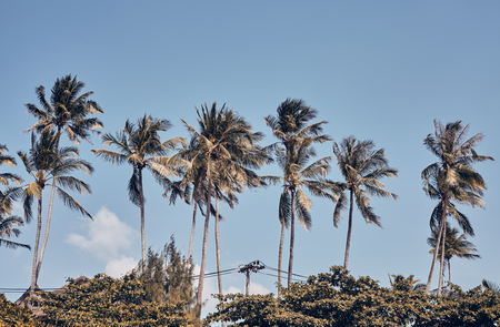 Row of palm trees against the blue sky, retro toning applied. Stock fotó