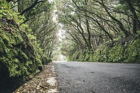 Scenic road in the Macizo de Anaga UNESCO biosphere reserve, Tenerife, Spain.